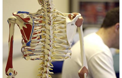 あなたの背骨・骨盤は大丈夫?